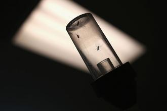 Mosquitos caught for testing await shipment to a lab on April 14, 2016, in McAllen, Texas.
