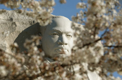 Cherry blossoms grow around MLK's monument