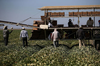 Male farmers in a fruit field in Central Valley, California
