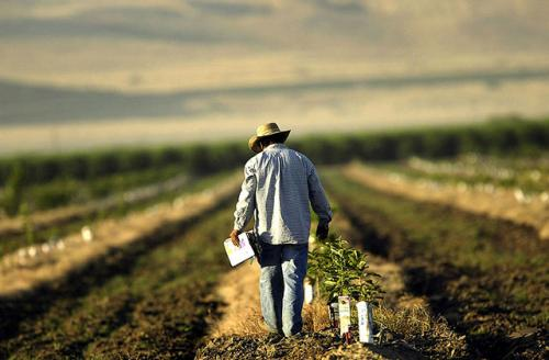 A farm worker labors in a field southeast of Bakersfield, California, one of the nation's most important agricultural and oil producing areas. Mass food production has brought heavy use of pesticides that have sickened area workers and residents.