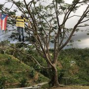 A Puerto Rican flag and an effigy hangs from a tree