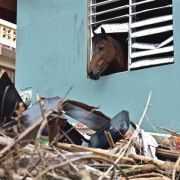 A brown horse sticks his face out of a window of a structure surrounded by debris