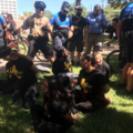 People in black and yellow shirts sit in the grass, surrounded by police officers dressed in black and blue
