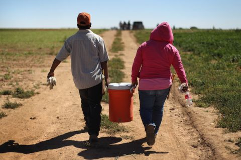 A man in a brown shirt and hat and a woman in a pink sweatsuit carry a cooler of water into a field.