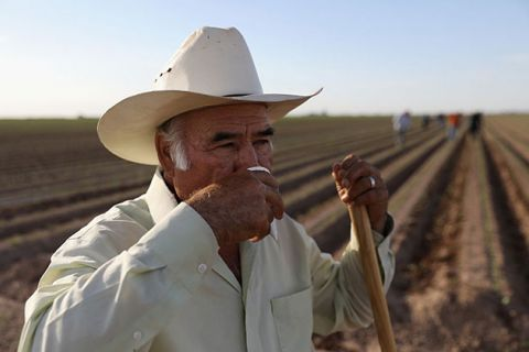 A supervisor takes a break from hoeing a cabbage field with Mexican farm workers on September 27, 2016, in Holtville, California.